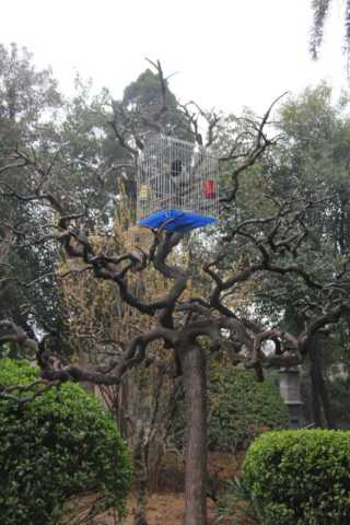 Bird cage in tree in Xi'an.