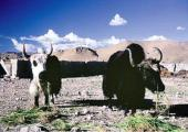 16 day tour Tibet Mt Kailash Adventure pictures