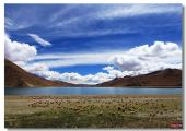 13 days China classic tour and highlights Tibet pictures