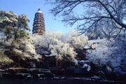 12 Days Tour (Beijing -Xi\'an -Shanghai -Suzhou- Hangzhou), China