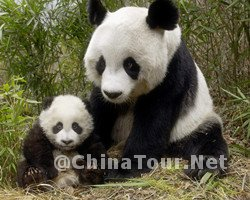 beijing zoo-Top 10 Beijing Must See Attractions