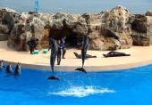 1 Day Hong Kong Island &Ocean Park tour pictures