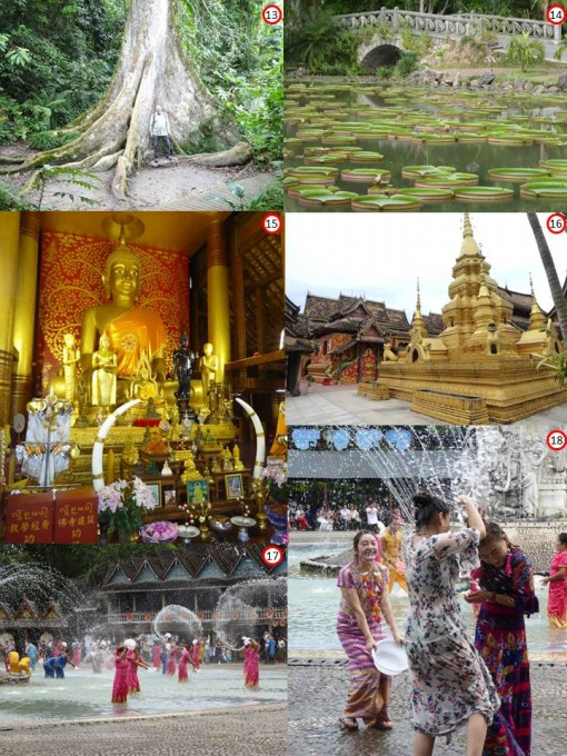 13.	Tree with buttress roots in the rain forest of Xishuangbanna Autonomous Prefecture 14.	Giant water lilies – Victoria amazonica – Xishuangbanna Tropical Botanical Garden 15.	Buddhist temple at the Dai People's Village in Ganlanba 16.	Buddhist temple at the Dai People's Village in Ganlanba 17.	Water Splashing Festival performed for tourists daily in Ganlanba 18.	Enthusiastic tourists caught up in the spirit of the Water Splashing Festival