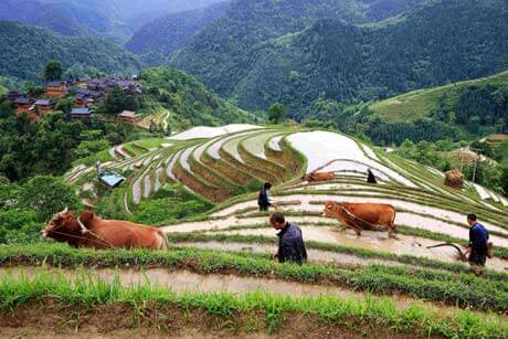 8 days Minority and Natural Scenery Tour in Guizhou Province