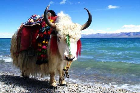 7 day silk road tour with Qinghai Lake